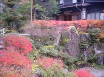 玄関前の赤絨毯(25年11月4日撮影)