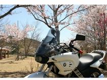 桜・ライダー