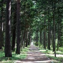 *大芝高原内施設《みんなの森》/森林セラピーロードに認定されています。
