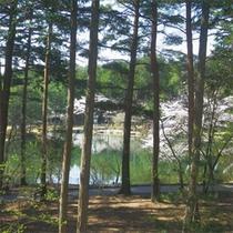 *本館客室からの眺め/緑の木立と、その奥には大芝湖の眺め。爽快感いっぱいです!