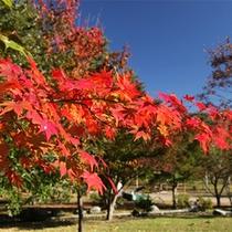 *秋の大芝高原/大芝荘周辺が色鮮やかな紅葉に包まれる季節。