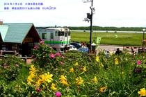 小清水原生花園 006