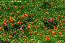 小清水原生花園 003
