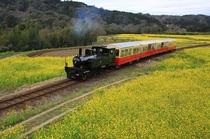小湊鉄道トロッコ列車