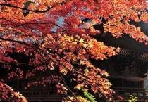 鹿野山神野寺 秋の紅葉