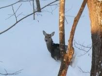 美留和の森は動物もいっぱい♪