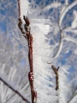 冬の自然の芸術、霧氷。