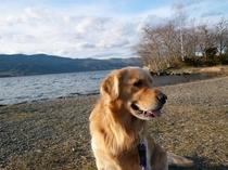 湖での看板犬マッシュ