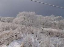 1-12早朝 樹氷