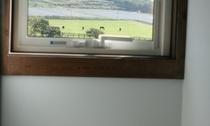 部屋の窓から望める馬たち