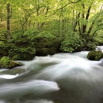 奥入瀬渓流「阿修羅の流れ」