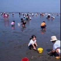 松阪市松名瀬海岸潮干狩り。いろんな種類の貝がいっぱい採れるよ!(*^^)v楽天500