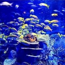 鳥羽水族館サンゴと魚の水中芸術 楽天500