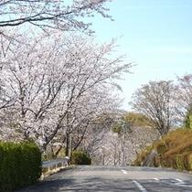 ホテル入口の坂道桜。桜の季節は、綺麗に咲き誇ります。(*^。^*)楽天500