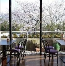 カフェから見える桜。美しい桜を見ながら珈琲を楽しんでください。楽天500