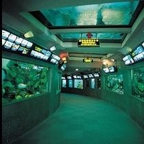 志摩マリンランド。大きな観賞用水槽でさかなクンが自由に泳いでいます!光と影でとっても美しく見えるよ。