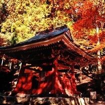 鈴鹿市椿大社 秋紅葉の美しい神社です。<m(__)m>楽天500
