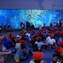 鳥羽水族館 さあ、みんなお行儀よく座ってね!(*^^)v楽天500