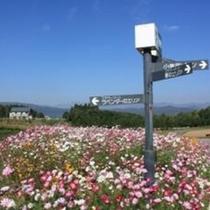 牧歌の里 花畑