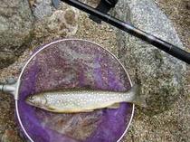 周辺で渓流釣りも楽しめます