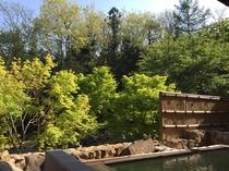 客室付き露天風呂から初夏の前庭を楽しむ