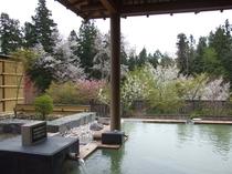 春の客室付き露天風呂