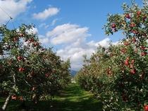みはらしファームのりんご狩り