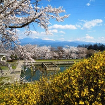 *羽広荘から望む南アルプスの春