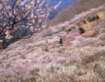 恒例イベント「梅の宴♪♪」