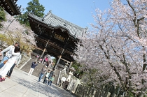 粉河寺(桜)