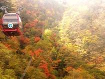 紅葉が見事な箱根ロープウェイ。