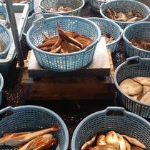 鰺ヶ沢漁港にて水揚げされる鮮魚