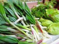 【山菜】雪解けの季節から、5月中頃まで味わえる旬の素材です。