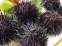 【キタムラサキウニ】磯の味が濃厚!甘くてコクがあるウニです。