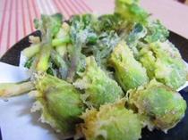 【料理】山菜の天麩羅