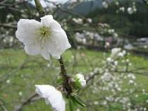 【周辺】周辺散策も楽しい春の大原。