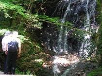 宿から約15分、音無の滝。絶好の散歩コース!新緑の季節は気持ちがいいですよ