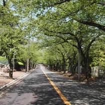 新緑の伊豆高原
