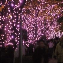 【600×600】目黒川みんなのイルミネーション2012 街路樹