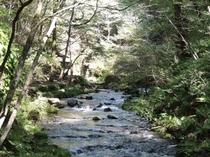 観光 竜返しの滝3