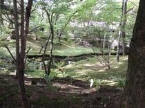 近隣 別荘の苔庭2