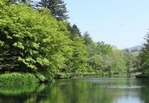 観光 雲場池2