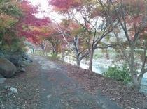 稲瀬川の紅葉