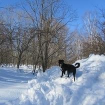 犬は雪が大好き