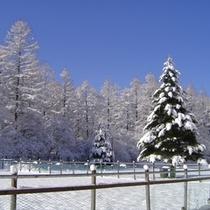 雪景色(庭からの)