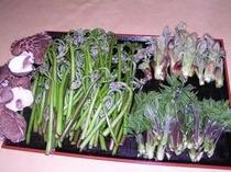 18.付近で採れる山菜ワラビ、たらの芽、こしあぶら。