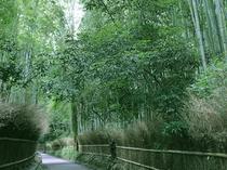 趣ある竹林