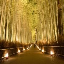 嵐山花灯路-竹林の小径