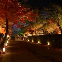 嵐山花灯路-灯りと花の路