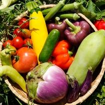 地元契約農家育ち、毎朝届く色とりどりの野菜